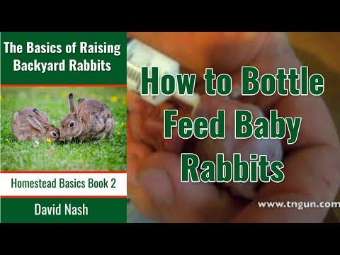 Bottle Feeding Baby Rabbits