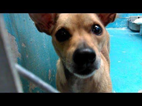 8 Humane Society of Southern Arizona Doggies Adoptable on 2-22-18