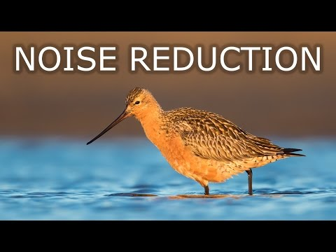 Noise Reduction in Adobe Photoshop CC