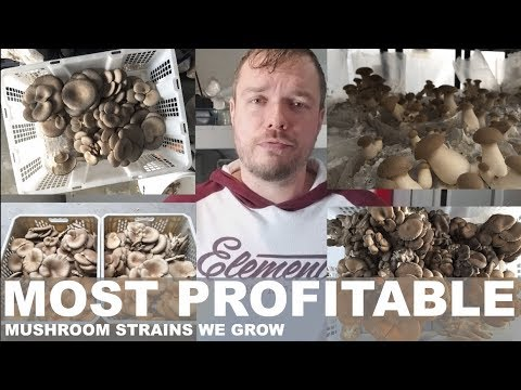 These Are My Most Profitable Mushroom Mycelium Strains That We Grow. Advice And Tips For Beginners