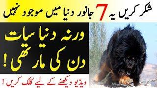 7 Deadliest Animals From Past | Mazi Kay 7 Khatarnak Janwar | Islamic Solution