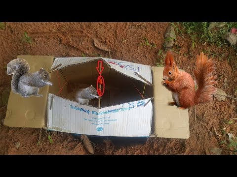 Awesome Quick SQUIRREL TRAP Using BOX Paper \that works 100%\ DIY Cardboard SQUIRREL TRAP