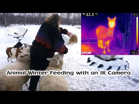 Winter Feeding with a Thermal IR Camera
