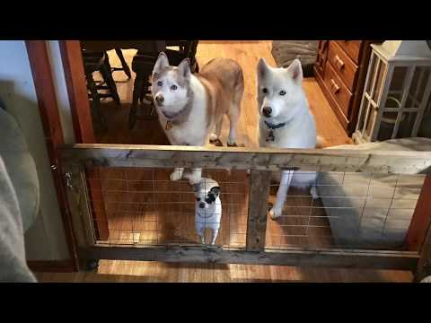 Simple Reclaimed dog gate.
