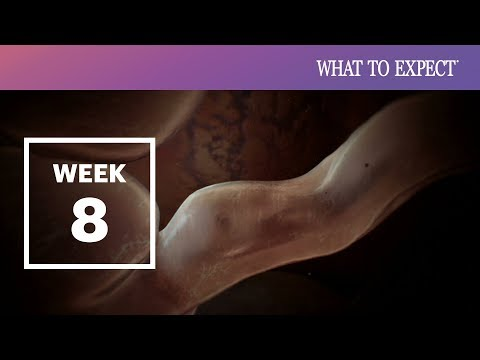 8 Weeks Pregnant | What To Expect