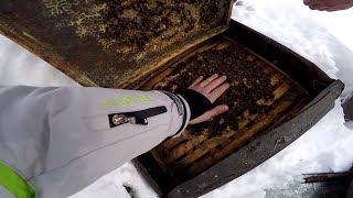 Зимовка пчел в деревянных ульях с толщиной стенки 20 мм. На пасеке у братьев Соловьевых