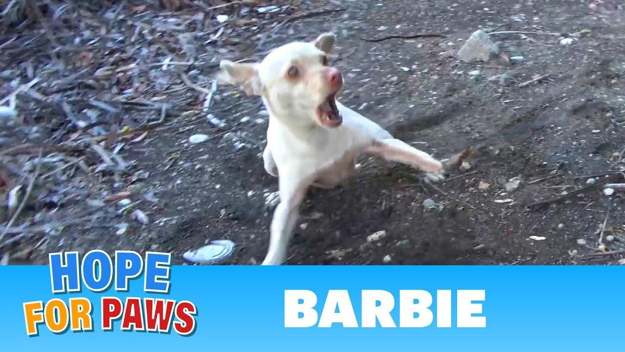 Homeless dog by the freeway is TERRIFIED of humans - the end will blow your mind!