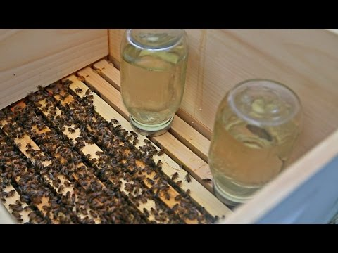 Time to Feed my Bees (Summer)