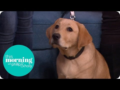 Guide Dog Puppy Training | This Morning