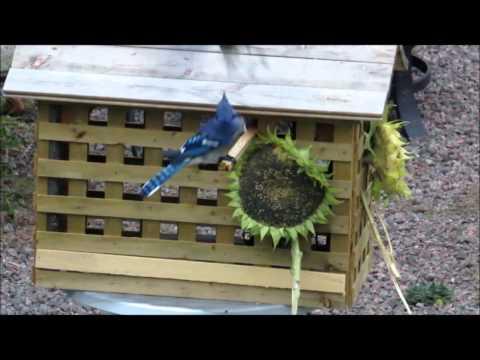 DIY... Bird feeder house for small birds only!