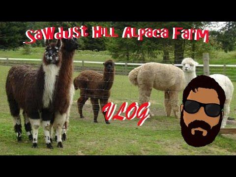 Sawdust Hill Alpaca Farm