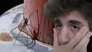 IL RAGNO PIÙ GROSSO CHE ABBIA MAI VISTO. (Giappone, Vlog #1)