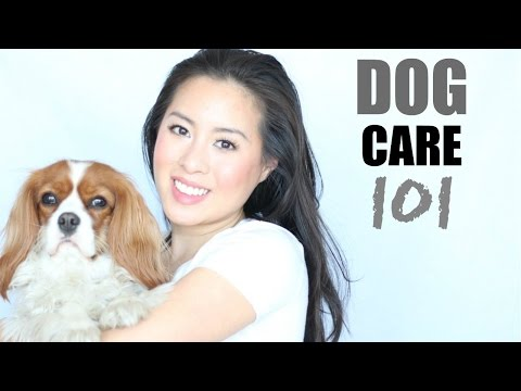 Dog Care 101: Must-Have Accessories | Grooming, Oral Health, Claws & Ears | Herky the Cavalier