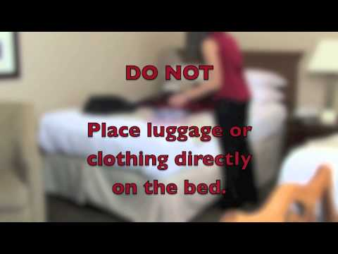 How to Inspect a Hotel Room for Bed Bugs