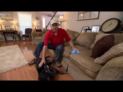 How to Clean Pet Hair Off Furniture