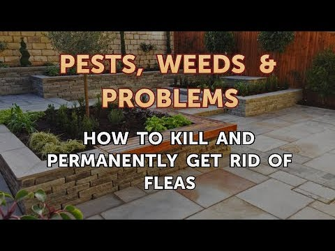 How to Kill and Permanently Get Rid of Fleas