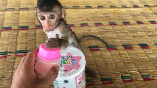 Baby monkey dell want to drink milk