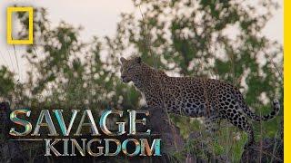 No Place Like Leopard Rock | Savage Kingdom
