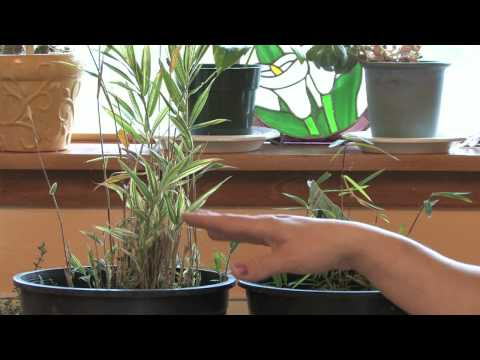Gardening Tips : What Is the Fastest Growing Plant?
