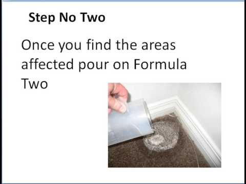 How To Eliminate Cat Urine Smell Permanently | Simple 3 step method that works