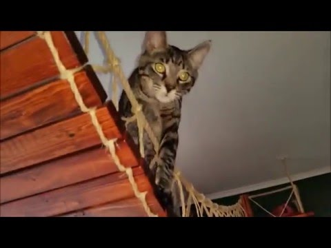 How to build a hang bridge for cats