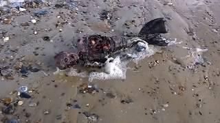 जलपरियों का रहस्य || Mystery of Mermaid In Hindi || जल परी का पूरा रहस्य || Jalpari found in India