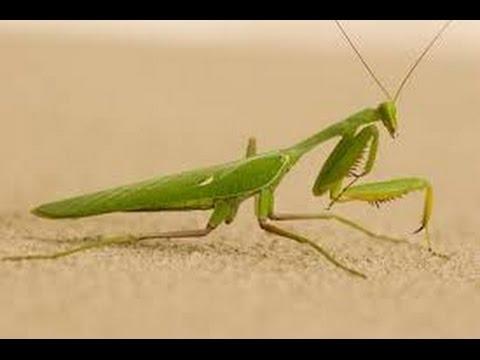 how to make grasshopper insect,ถักตั๊กแตน,งานฝีมือจากเชือก