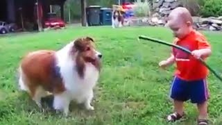 DOGS LOVE BABIES (FULL) 🐶😛 Cute BABYSITTING Dogs [Funny Pets]