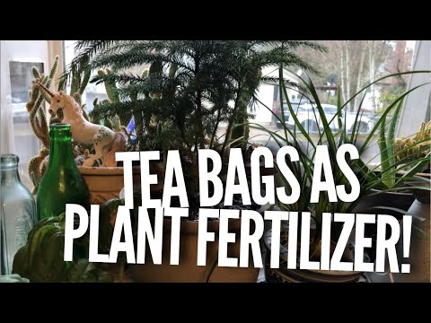 How to Fertilize your Plants with Tea Bags