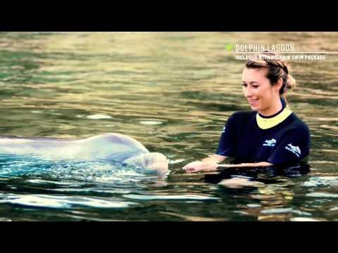 Explore Discovery Cove with Travel Expert, Julia Dimon | Discovery Cove®