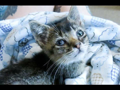 Rescuing a Feral Kitten in NYC