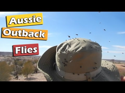 Overrun by Flies in the Australian Outback