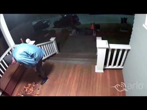 Caught on Arlo: Porch Snooper