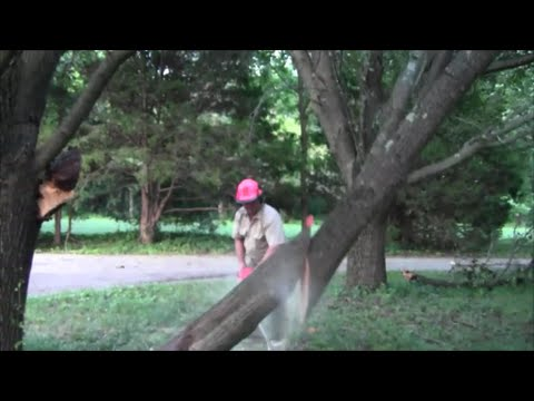 Staying Alive When Cutting Lodged Limbs