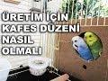 Muhabbet Kuşu Üretimi İçin Kafes Düzeni Nasıl Olmalı