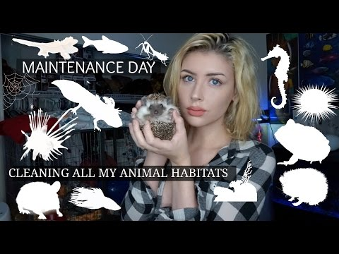 CLEANING ALL OF MY ANIMAL HABITATS