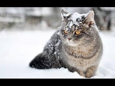 The Wonderful World of Cats - HD Nature Wildlife Documentary