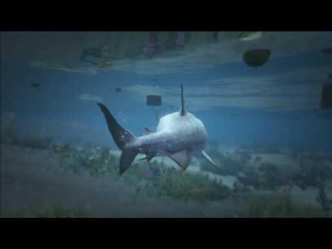 Trevor the tiger shark
