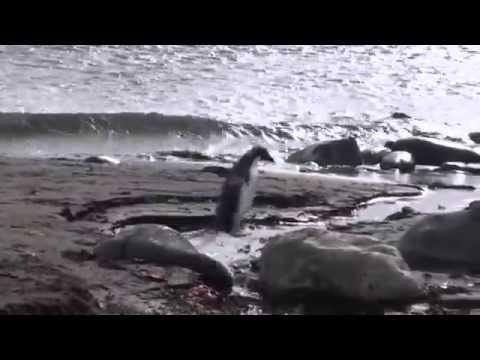 Antarctica - MV Fram, Elephant Island, South Shetland and Polish Arctowski Station