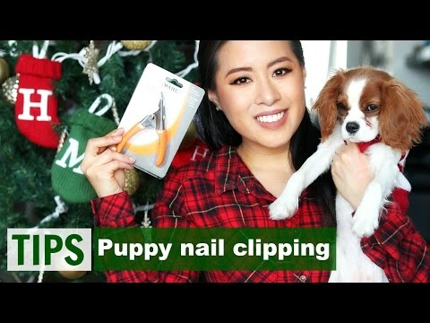 How to: Clip Puppy's Nails | Tips & Tricks | Milton the Cavalier