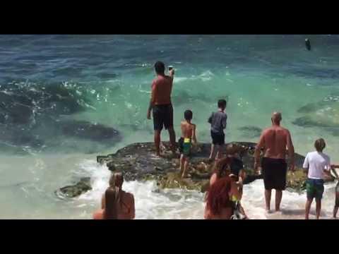 Requin a hookipa beach maui aout 2017