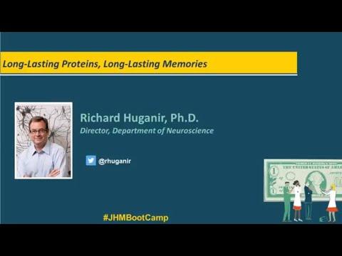 Long Lasting Proteins, Long Lasting Memories | Richard Huganir, Ph.D.