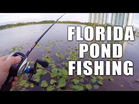 Urban Pond Bass Fishing in Florida