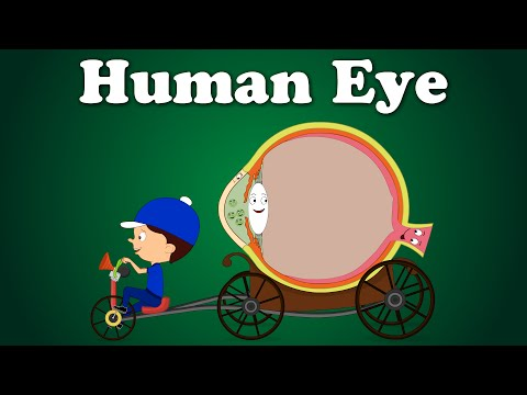 Human Eye | It's AumSum Time