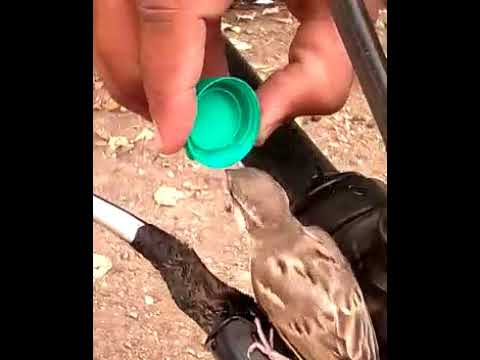 Keep Water for Birds