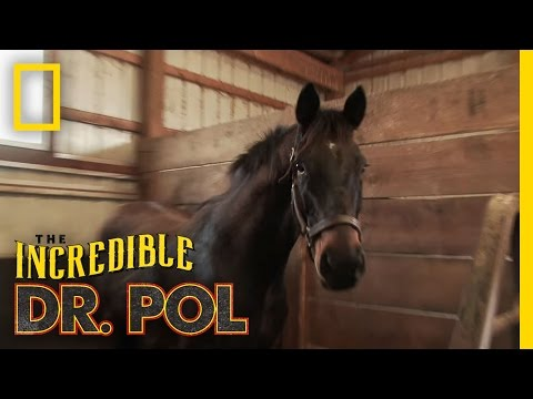 Checking the Horses   The Incredible Dr. Pol