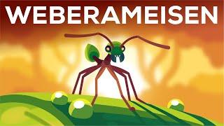 Meisterarchitekt der Insektenwelt - Die Weberameise