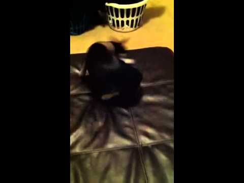 Crazy dog attacks her tail