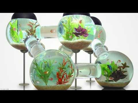 ☑️ UPDATE 2018: 40 Amazing Aquarium Fish Ideas 2018 - Creative Home Design Fish Tank and Colors