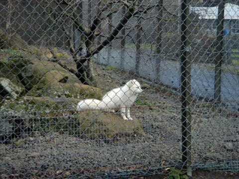 Reykjavík Zoo